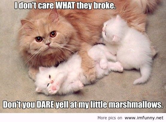 Funniest cat with saying