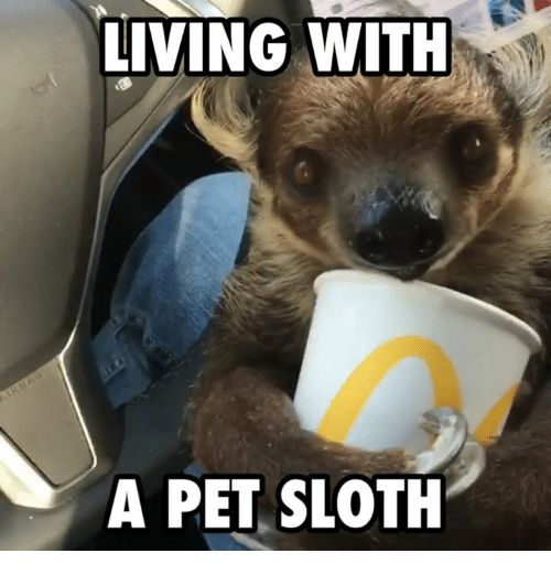 Memes Sloth and 🤖 LIVING WITH A PET SLOTH