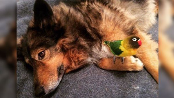 story thumbnail 3406 dog bird friendship 600x338