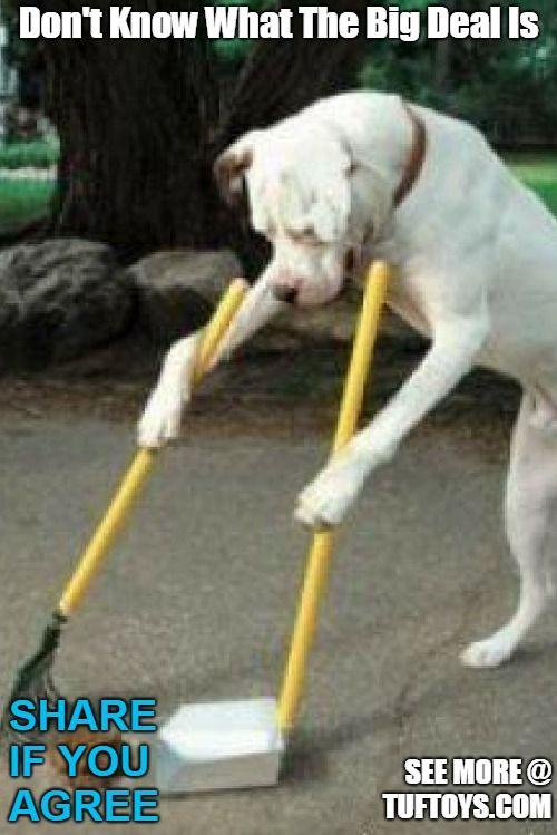 dog sweeping own poop