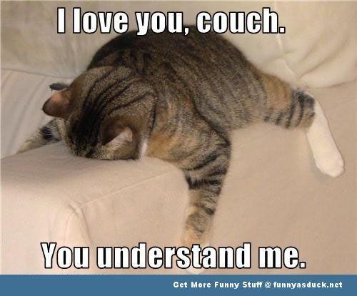 CUTE ANIMAL LOVE MEMES image memes at relatably