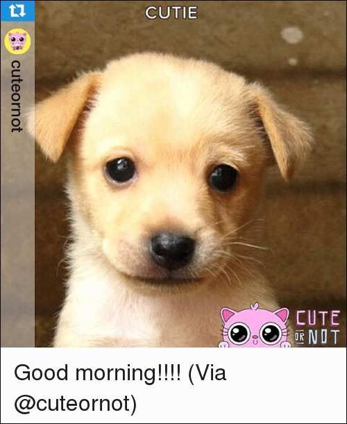 46 Inspirational Pics Cute Good Morning Monday