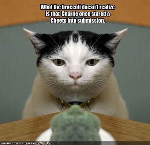 Funny Cat with Captions with Guns With Quotes