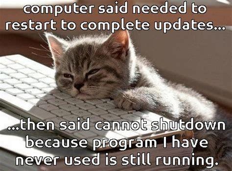 meme of cat feels funny cats 7