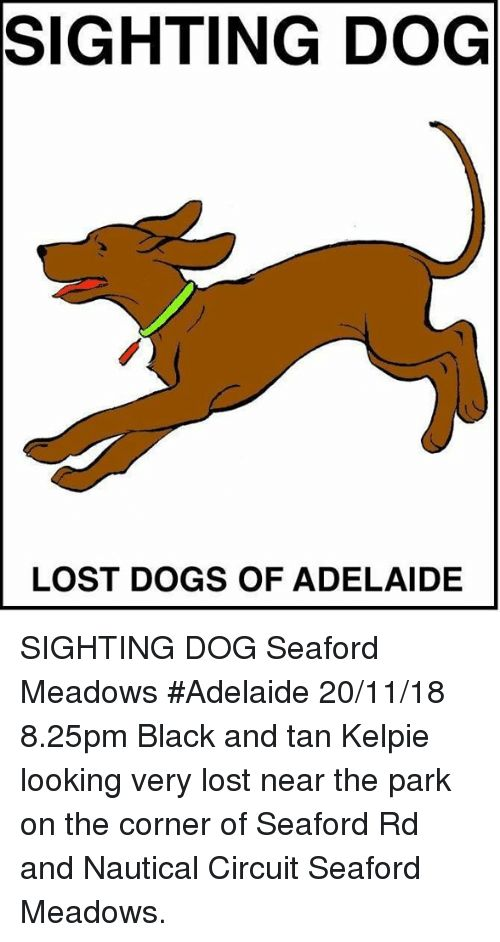 Dogs Memes and Lost SIGHTING DOG LOST DOGS OF ADELAIDE SIGHTING DOG Seaford