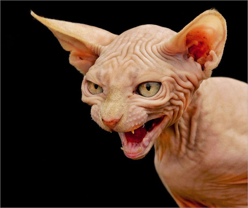 Top 10 Seriously Scary Halloween Cats