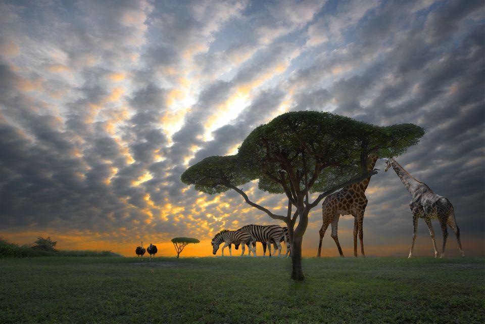 Sunset in safari with animals Africa