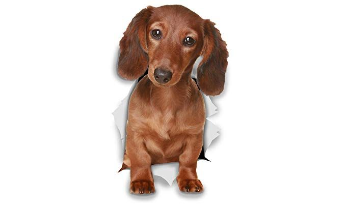 Winston & Bear 3D Dog Stickers 2 Pack Long Haired Dachshund Sausage Dog For Wall Fridge Toilet And More Long Haired Dachshund Gifts Dog Stickers