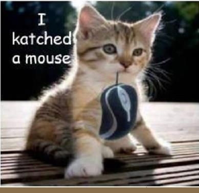 I was looking for that mouse everywhere For more funny cat images with hilarious quotes visit funny cat pics