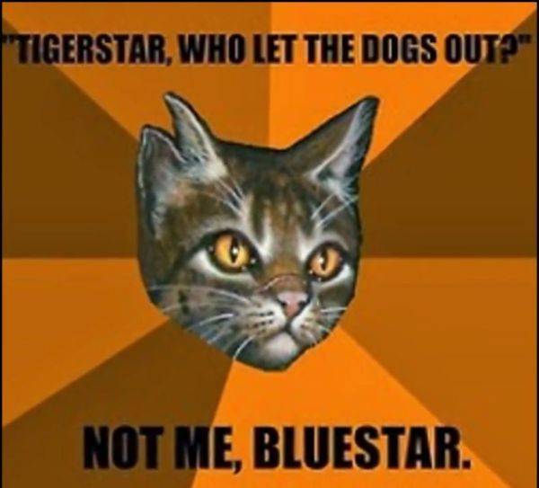Tigerstar Warrior Cat Memes Funny