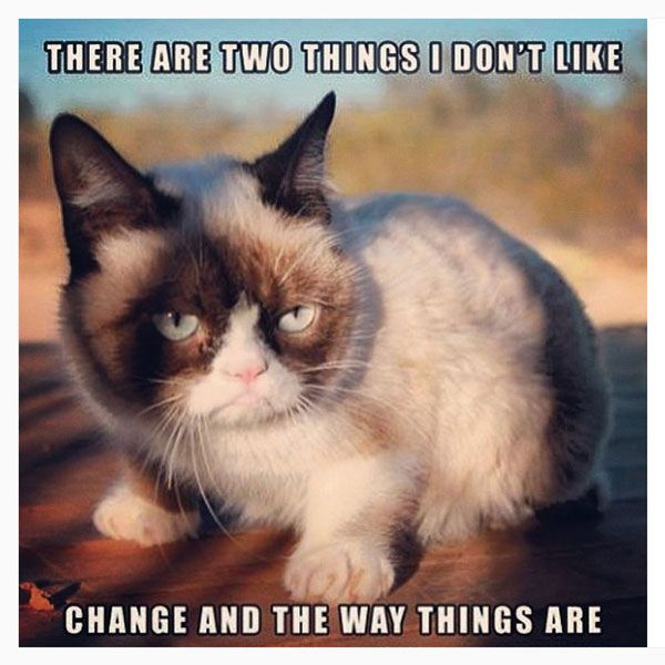 two things i don t like meme posted by awwunicorns Grumpy Cat