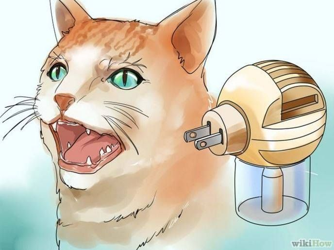 Out of Context Wikihow Cats Edition