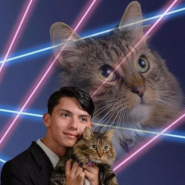 Schenectady High School Cat cat mammal small to medium sized cats vertebrate whiskers cat like mammal