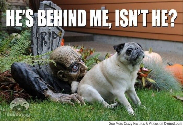 hilarious image funny dog picture Halloween meme dog meme