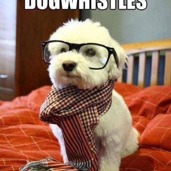 Hipster dog meme