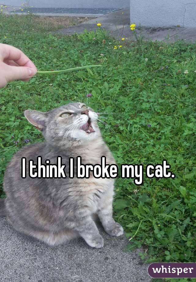 Get the Unbelievable Cat Memes Super Funny
