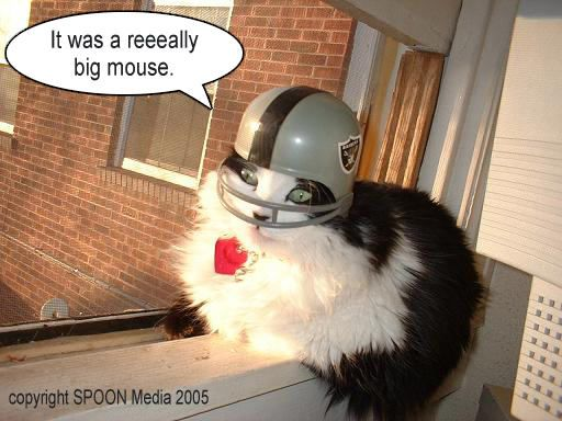 cat wearing football helmet