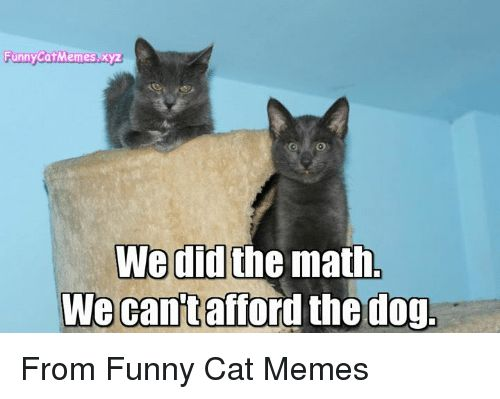 Funny Memes and Math Funny Cat Memes xyz We did the math