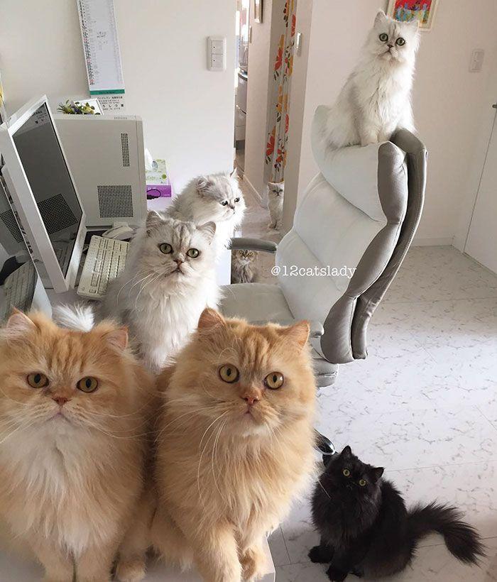 12 cats lady japan 33