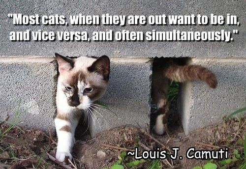 quotes cute Words Wisdom Cats funny