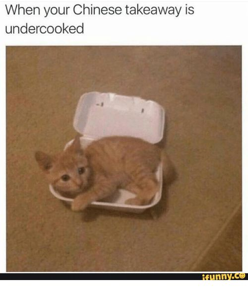 Undercooked Chinese Food Cat