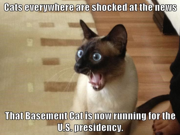 animals president shocked caption Cats