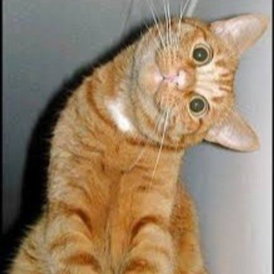 Get the Unbelievable Funny Profile Pictures Cat