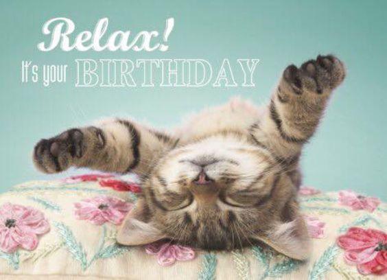 happy birthday cat images cat memes happy birthday cat memes funny cat memes pictures free