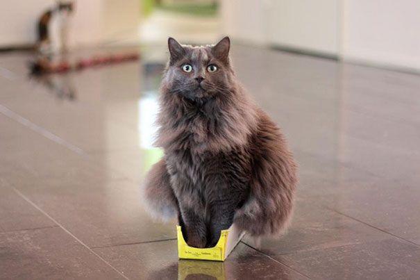 funny cats if it fits i sits 14