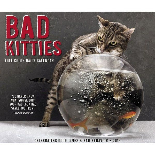 Shop 2019 Bad Kitties 2019 Desk Calendar Funny Cats by Willow Creek Press Sale Free Shipping Orders Over $45 Overstock