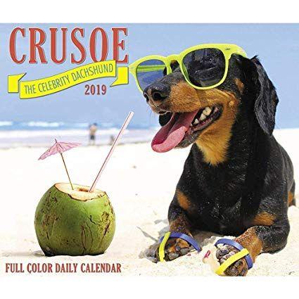 crusoe the celebrity dachshund 2019 daily desk boxed rh weiner dog skeleton