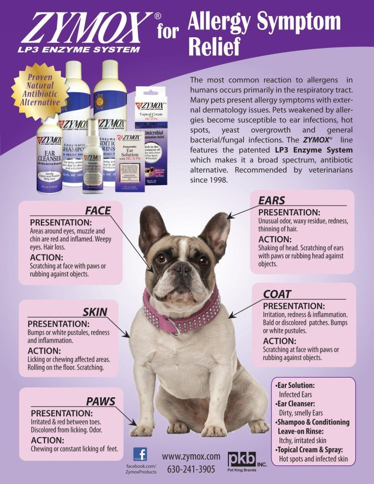 Zymox for Pet Allergy Symptom Relief Dogs Cats Pin it