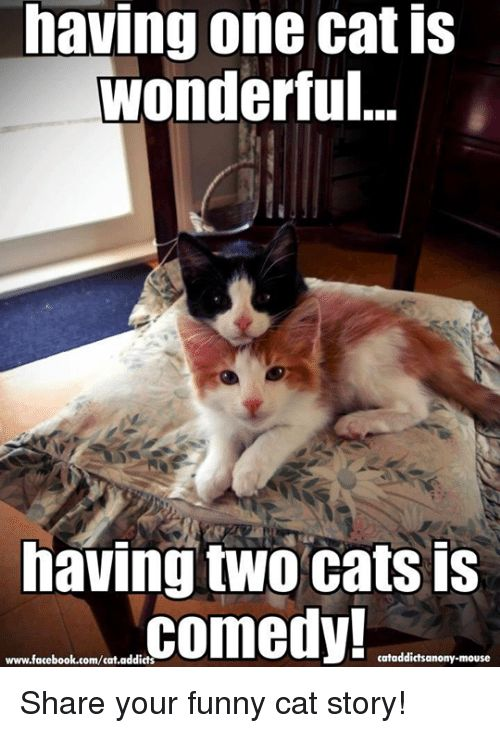 Memes Addicted and Mouse having one catis Wonderful having two cats is edy