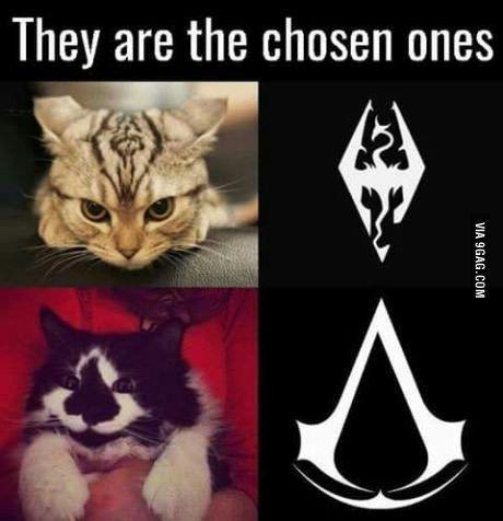 Dovahcat & Assassin s Kitten Skyrim Cat Skyrim Funny Skyrim Dragon Gamer Cat
