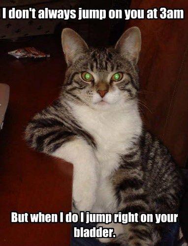 funny cat jump night