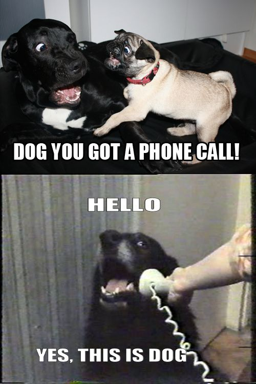 DOG YOU GOT A PHONE CALI