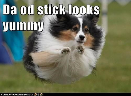 Get the Wonderful Funny Animal Memes for Adults