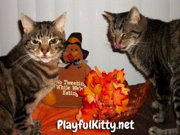 Manna and Cinco enjoying some Thanksgiving cat nip cats pets