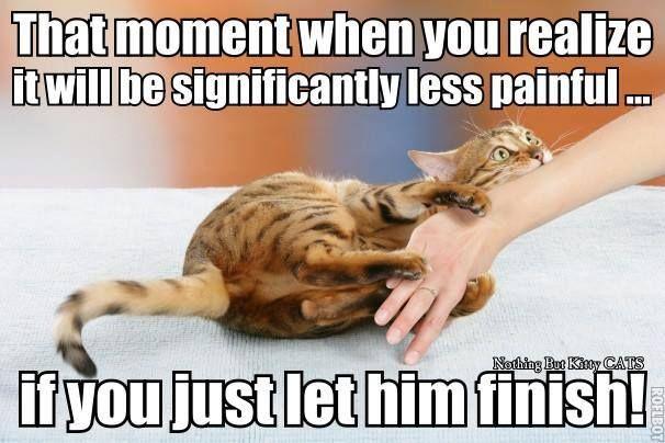 When Cats Attack cute cat humor memes Humor & Memes