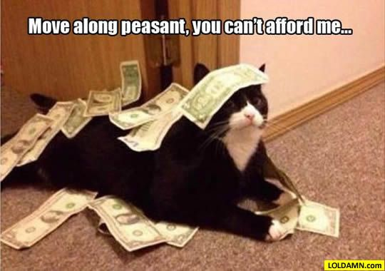 funny cat with words money