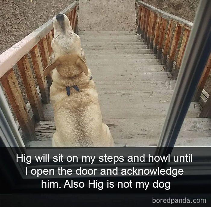 Get the Wonderful Funny Dog Bork Memes