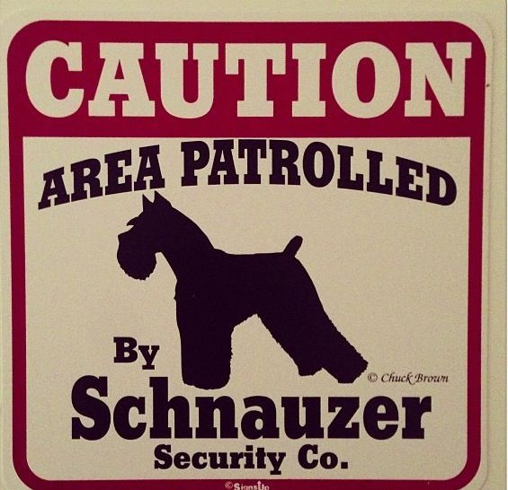 Schnauzer Patrol so right alerts the rest of the troop