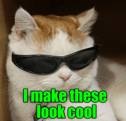Chill looking cat with shades made into a meme captioned the difference between meme and