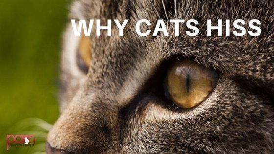 It s a sound every cat parent has heard at some point Even if your cat is the sweetest little kitty on the planet if she has ever felt threatened or