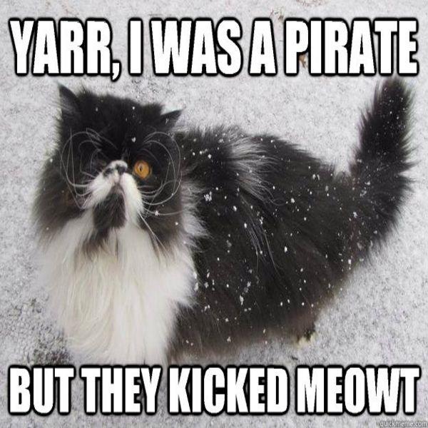 funny cat memes27