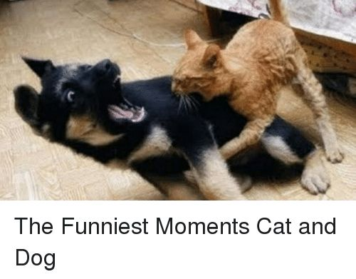 Cats Dogs and Funny The Funniest Moments Cat and Dog