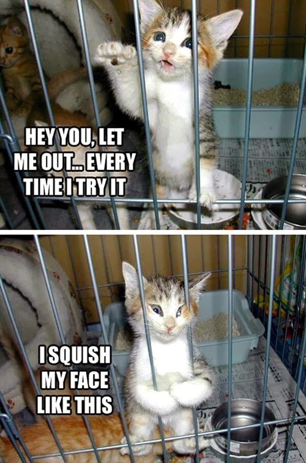 30 Funny animal captions part 19 30 pics cute kitten with funny