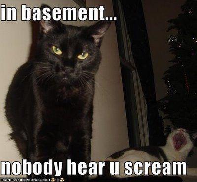basement cat gonna make you holler