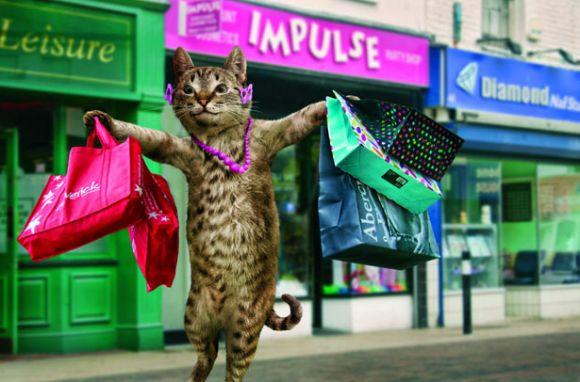 Funny Cat Calender 2011
