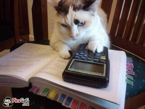 back to school funny cat